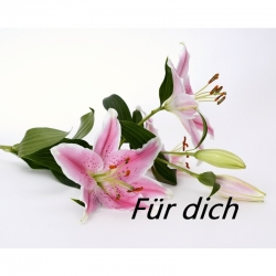 Engelkärtchen für Dich( ca Visitenkart..